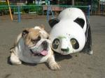 なんで、パンダと写真なの?